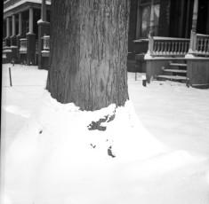 Nevo_1893.jpg