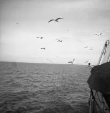 Nevo_1940.jpg