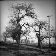 Nevo_1962.jpg